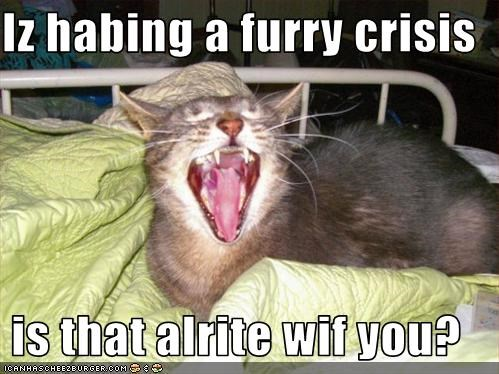 Iz habing a furry crisis  is that alrite wif you?