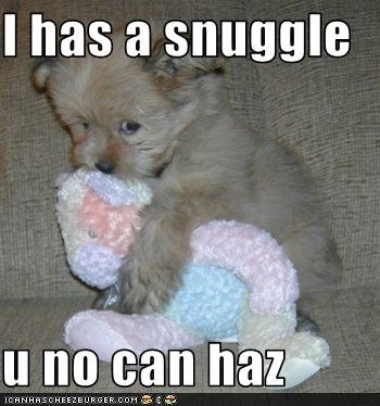 I has a snuggle  u no can haz