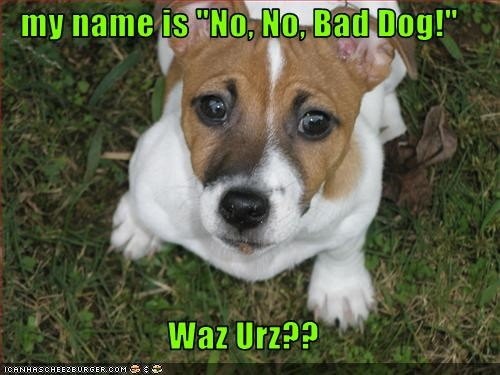 "my name is ""No, No, Bad Dog!""  Waz Urz??"