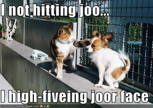 face,high five,hit,lolcats,papillon,punch
