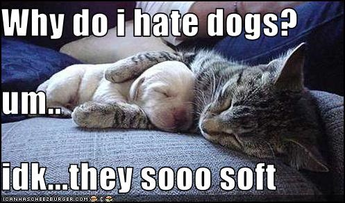 Why do i hate dogs? um.. idk...they sooo soft