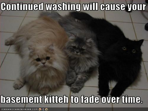 Continued washing will cause your  basement kitteh to fade over time.