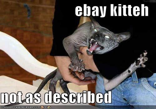 ebay kitteh  not as described