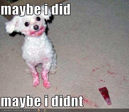 bad dog,dirty,eat,lipstick,maltese