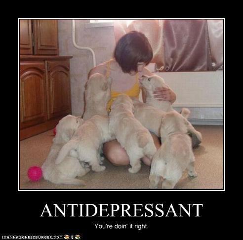 antidepressant,doin it rite,doing it right,golden retriever,happy,puppies