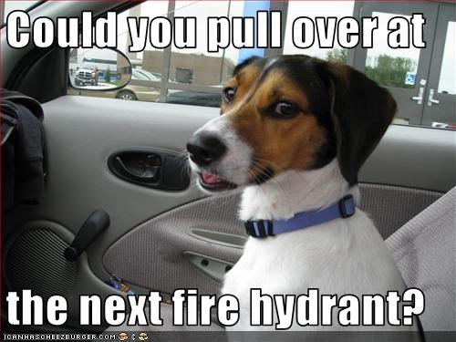 Could you pull over at  the next fire hydrant?
