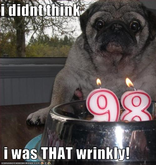 cake,candle,old,pug,wrinkles
