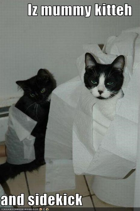 Iz mummy kitteh  and sidekick