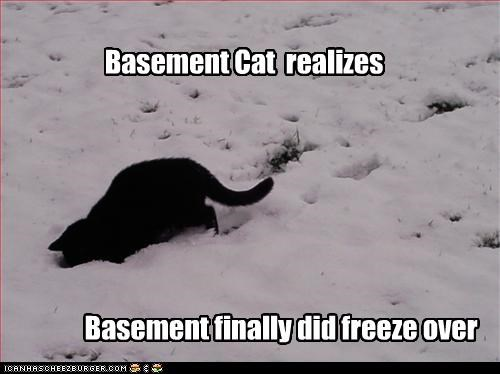 Basement Cat realizes