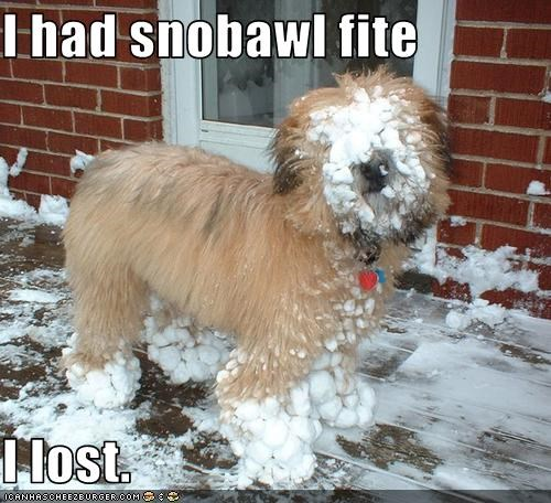 I had snobawl fite  I lost.