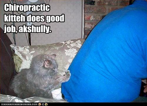 Chiropractic kitteh does good job, akshully.