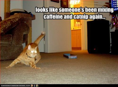 looks like someone's been mixing caffeine and catnip again...