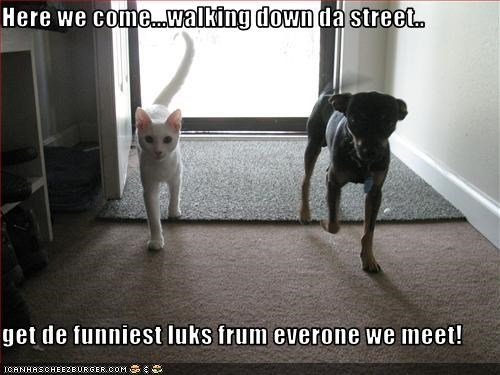 Here we come...walking down da street..  get de funniest luks frum everone we meet!