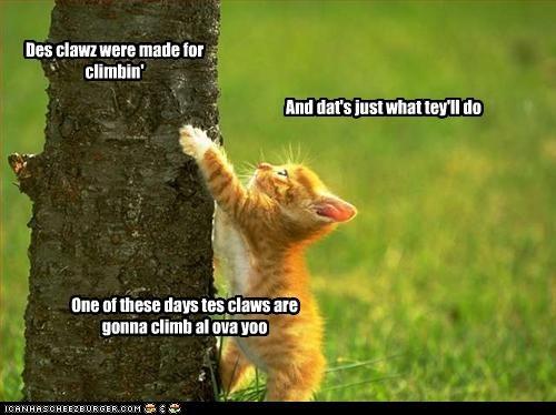 Des clawz were made for climbin'