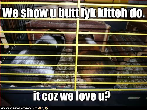 We show u butt lyk kitteh do.