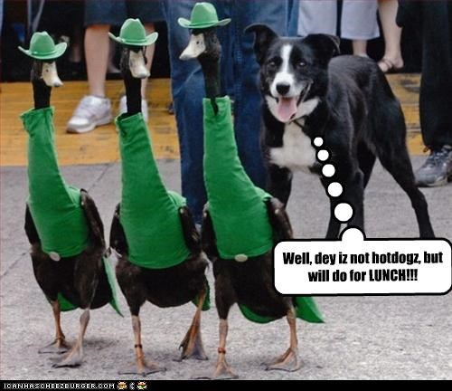 border collie,costume,duck,food,hotdog,lunch