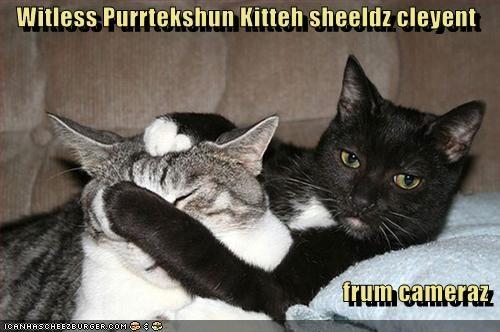 Witless Purrtekshun Kitteh sheeldz cleyent  frum cameraz