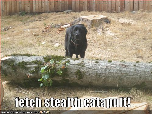 fetch stealth catapult!