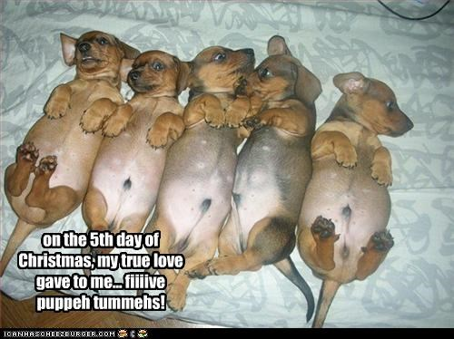 on the 5th day of Christmas, my true love gave to me... fiiiive puppeh tummehs!