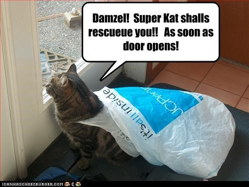 Damzel!  Super Kat shalls rescueue you!!   As soon as door opens!