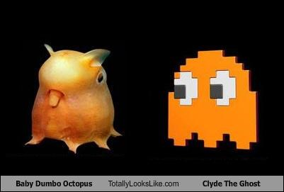Baby Dumbo Octopus Totally Looks Like Clyde The Ghost