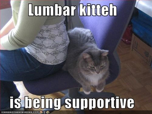 Lumbar kitteh  is being supportive