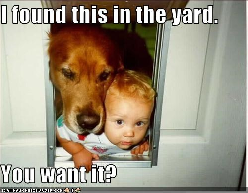 baby,doggie door,found,golden retriever,human,yard