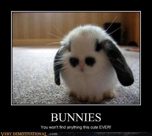Not Even Another Bunny