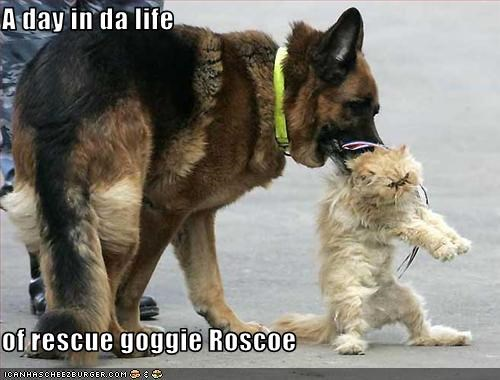 A day in da life  of rescue goggie Roscoe