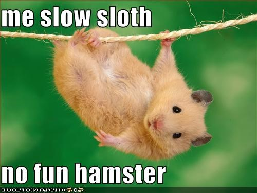 me slow sloth  no fun hamster