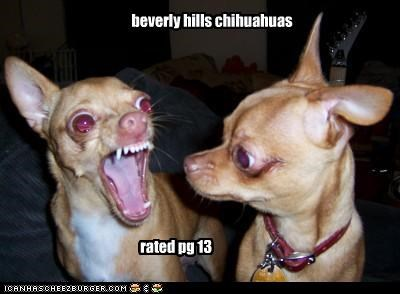 beverly hills chihuahuas