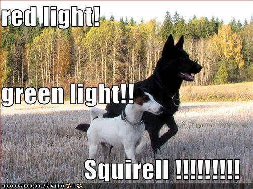 red light! green light!! Squirell !!!!!!!!!