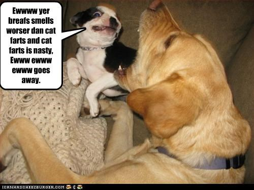 Ewwww yer breafs smells worser dan cat farts and cat farts is nasty, Ewww ewww ewww goes away.