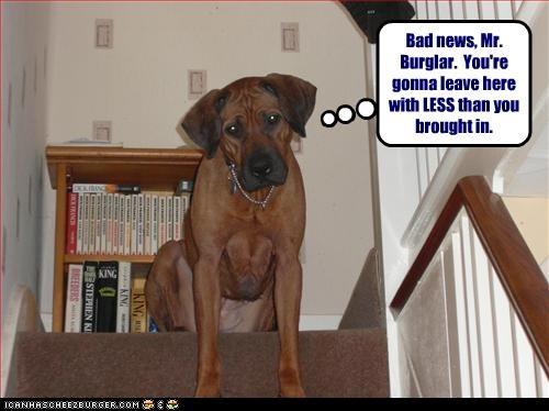burglar,guard dog,security,whatbreed