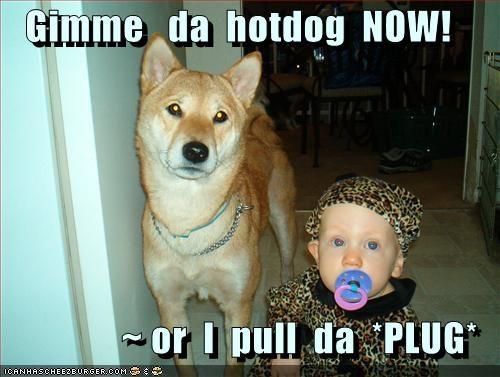 baby,german shepherd,hotdog,mixed breed,pacifier,threats