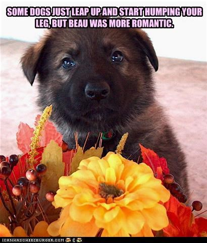 SOME DOGS JUST LEAP UP AND START HUMPING YOUR LEG, BUT BEAU WAS MORE ROMANTIC.