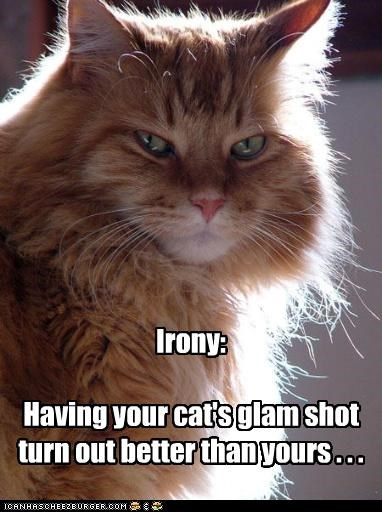 Irony:  Having your cat's glam shot turn out better than yours . . .