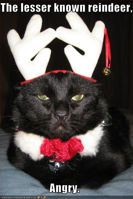 The lesser known reindeer,  Angry.
