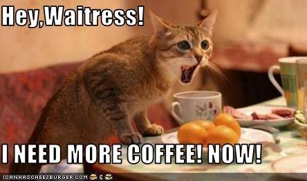 Hey,Waitress!  I NEED MORE COFFEE! NOW!