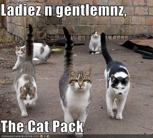Ladiez n gentlemnz,  The Cat Pack