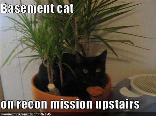 Basement cat  on recon mission upstairs