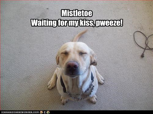 Mistletoe Waiting for my kiss, pweeze!