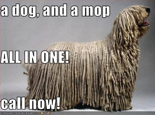a dog, and a mop ALL IN ONE! call now!