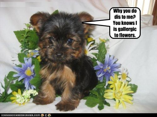 Why you do dis to me? You knows I is gallergic to flowers.