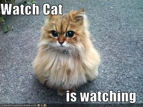 Watch Cat  is watching