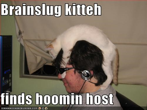 Brainslug kitteh  finds hoomin host