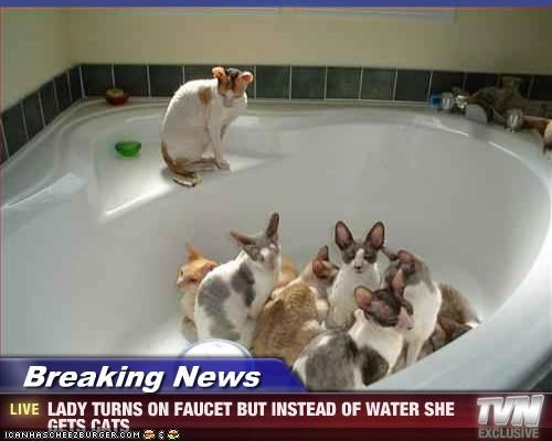 Breaking News - LADY TURNS ON FAUCET BUT INSTEAD OF WATER SHE GETS CATS
