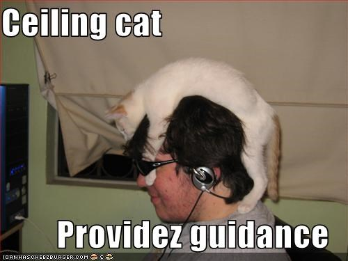 Ceiling cat  Providez guidance