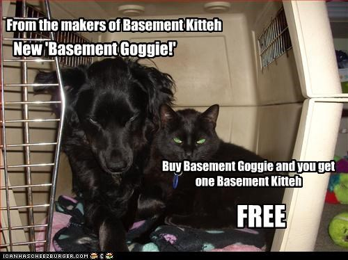 From the makers of Basement Kitteh