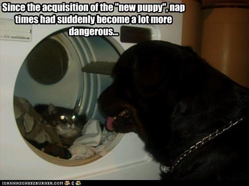 "Since the acquisition of the ""new puppy"", nap times had suddenly become a lot more dangerous..."